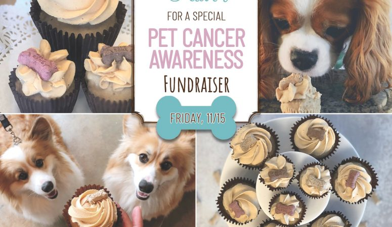 Stop in for a PUPcake on 11/15 and support Pet Cancer Awareness